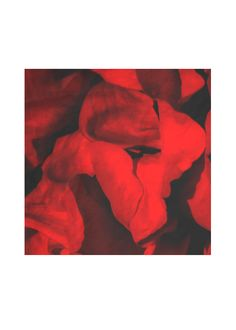 Mens Silk Pocket Square - Falling Poppies by VIDA VIDA