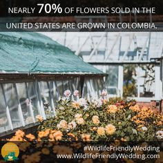 The transportation and energy costs of importing flowers add to your carbon footprint. Choose native, local flowers to reduce your impact and support pollinators Real Flowers, Cut Flowers, Silk Flowers, Wedding Costs, Our Wedding, Wedding Ideas, Alternative Bouquet, Silk Flower Arrangements, Brooch Bouquets