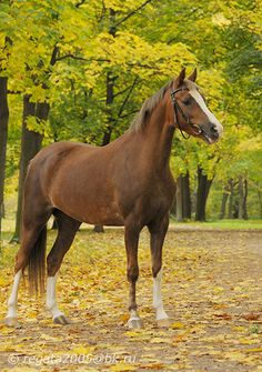 Now, I love me some warmbloods, some thoroughbreds, you name it... But Welsh ponies will always be my top choice.