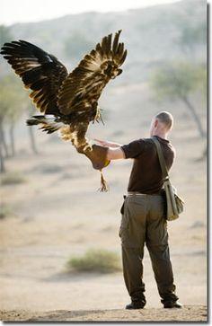 falcon handler