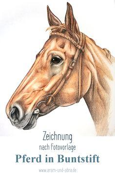 Zeichnung Buntstift Polychromos Pferd Fuchs Reiten Aram und Abra, Tierportrait, Illustration
