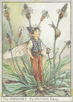 ribwort plantain | Ribwort Plantain Fairy A5 (Small) embroidery panel