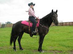 Canadian horse; Duchess