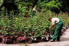 Giardinaggio e cura del verde