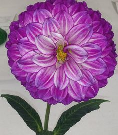 Dahlia flower from the San Diego flower show yesterday. So crazy beautiful you would think it is fake.