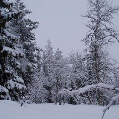 Snow covered trees in Trysil Norway Vacation Destinations, Vacations, Snow Covered Trees, Scenery Pictures, Scandinavian Countries, Scenery Wallpaper, Winter Beauty, Winter Scenes, Winter Wonderland