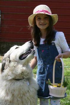 The Training of a Livestock Guardian Dog - The Paleo Mama