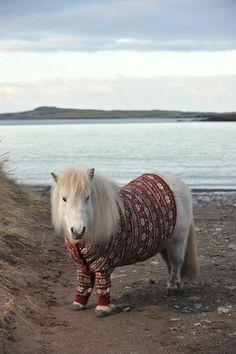 Лопапейса - национальный исландский свитер