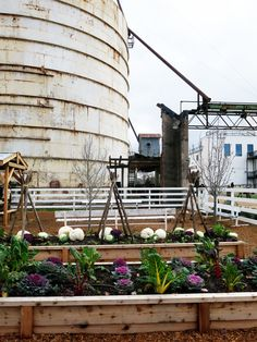 The garden at Chip and Joanna Gaines' Magnolia Market at the Silos from HGTVs Fixer Upper!! theonewhereimovetocalifornia.com