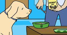She Feeds Her Dog Coconut Oil, Then Notices A Huge Transformation via LittleThings.com