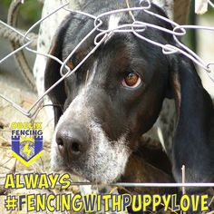 Innocent Dogs Are Suffering in Puppy Mills to Meet Pet Store Demands – Sign Petition to Stop This! Rogue River Rafting, Rescue Dogs, Animal Rescue, Shelter Dogs, Animal Shelter, Animal Welfare Act, Wireless Dog Fence, Animal Protection, German Shorthaired Pointer