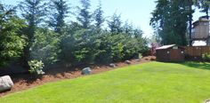pine trees for backyard landscaping | Strigenz backyard looking west-after