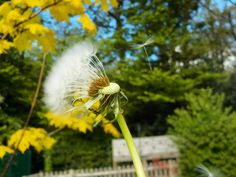 How amazing is this photograph taken by Lily-Rose at our after school photography club yesterday!? She's used the 'take a series of pictures' setting on a @nikoneurope #coolpix camera to capture the seeds blowing in the wind! We love it! #photographyforkids #photographyskills #photographytips #photography #photoclub #afterschoolphotographyclub #afterschoolclub #youngphotographer http://tipsrazzi.com/ipost/1501516204866333161/?code=BTWdQhvjOnp