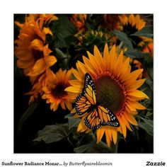 Sunflower Radiance Monarch Butterfly Perfect Poster