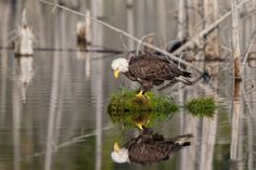 Mirror mirror... Photo by Fred  Lemire -- National Geographic Your Shot