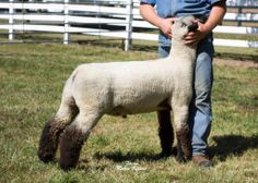 We take sheep & goat pics too! Check out these videos about showmanship for both species on the #blog --- Got Focus? :|: Blog from Focus Marketing Group, Inc.: Informative Videos