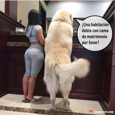 Meme amo a mi mascota #girl #sexy #dog #love #amor #chiste #meme #español #memesenespañol #2017 #memesvip #chistecorto #humor