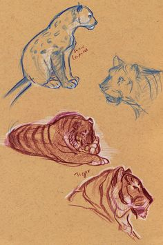 sketches #tiger #snow #leopard