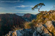 Famous pine on Sokolica, Pieniny Mountains.