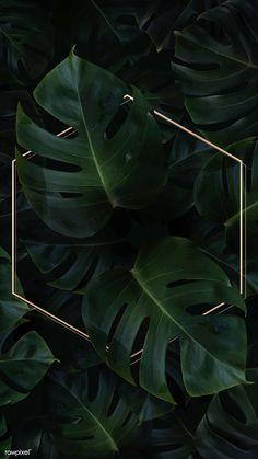 Hexagon golden frame on a tropical background vector premium image by Adj HwangMangjoo marinemynt Wallpaper Free, Plant Wallpaper, Framed Wallpaper, Tropical Wallpaper, Green Wallpaper, Iphone Background Wallpaper, Cellphone Wallpaper, Aesthetic Iphone Wallpaper, Flower Wallpaper
