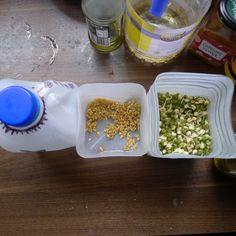 DIY sprouter using milk bottles | MILKCRATE Events