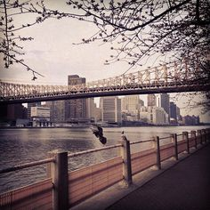 spring 2013 in #nyc