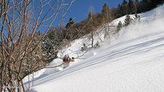 #Skifreeride, Plaisir en famille- Profitez de cette station familiale #Gresse en Vercors Voyage Ski, Ski Freeride, Val D'isère, Best Skis, Skiing, Snow, World, Outdoor, Alps
