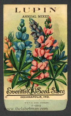 EVERITT'S SEED STORE,  Lupin 131, Vintage Seed Packet