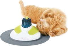Top 10 cat toys to get for the holidays | Dr. Justine Lee | Dr. Justine Lee
