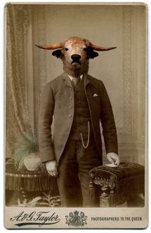 Charlotte Cory, photomontage, homme à tête de boeuf, animaux