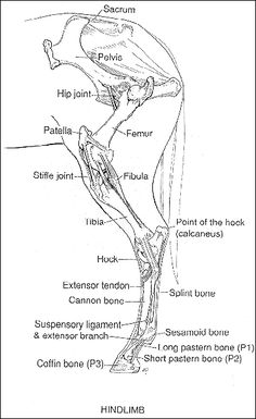 87 best Horses - Anatomy and Care images on Pinterest | Horses ...
