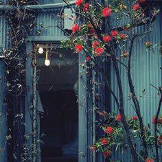 花とトタン