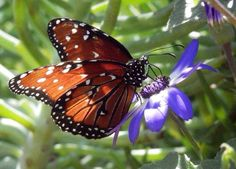 Flora and Fauna Flora And Fauna, Butterflies, Arizona, Sweet, Candy, Butterfly