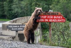 "Reading road signs is important — and thanks to a bear, this sign in Alaska is impossible to miss. ""Drive Safe"" by Jonathan Irish. Courtesy of Comedy Wildlife Photo Awards Comedy Wildlife Photography, Photography Awards, Animal Photography, Nature Photography, Animals Doing Funny Things, Funny Animals, Funny Animal Photos, Funny Photos, Photo Animaliere"