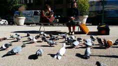 Pigeons sculptures