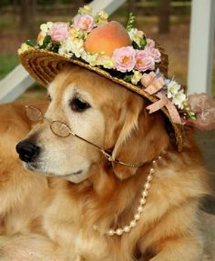 Mr. Amble's dog, Old Girl, is so patient with us, when we dress her up for tea.  She doesn't need the spectacles, but we think they add a nice touch to her look.