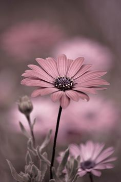 flowers photography Oops~A~Daisy Wallpaper Nature Flowers, Flower Iphone Wallpaper, Beautiful Flowers Wallpapers, Beautiful Nature Wallpaper, Pretty Wallpapers, Flowers Nature, Aesthetic Iphone Wallpaper, Pretty Flowers, Pink Flowers