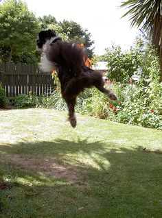 20 Funny Pics of Flying Dogs Catching Frisbees Dog Pictures, Funny Pictures, New Funny Pics, Flying Dog, Graffiti, Horses, Dogs, Animals, Fanny Pics
