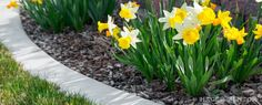 Are your external surrounding grounds well maintained?