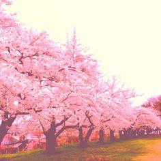 How Pretty!