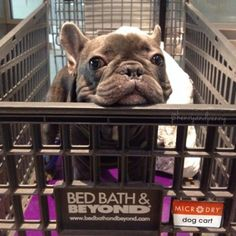 As an avid dog lover and owner, this list of dog - friendly stores where you can shop with your pup is pretty excellent. A lot of these I never would have guessed!