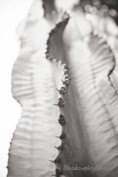 Cactus Scoliosis