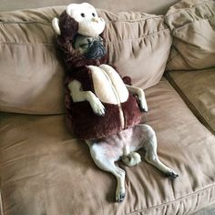 Monkey pug