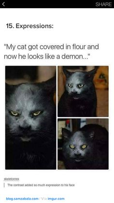 27 Cat Pictures That Are Never Not Funny - Cute funny animals - Funny Animal Memes, Cute Funny Animals, Funny Animal Pictures, Freaky Pictures, Funny Cute Cats, Random Pictures, 9gag Funny, Funny Jokes, Funniest Memes