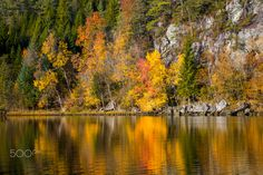 The Beauty of Autumn - A cluster of autumn colored trees reflecting in the calm lake. Autumn, River, Mountains, Nature, Landscapes, Trees, Calm, Outdoor, Beauty