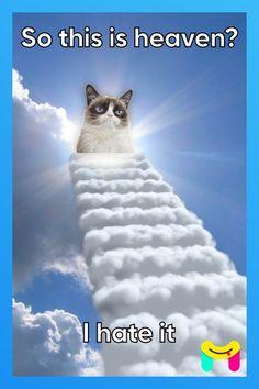 Grumpy Cat Quotes, Funny Grumpy Cat Memes, Funny Cats, Funny Memes, Jokes, Cute Animal Memes, Funny Animal Quotes, Cute Funny Animals, Animal Humour