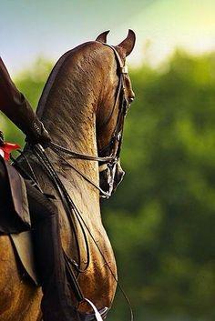 The beautiful Saddlebred. Nothing like this feeling...