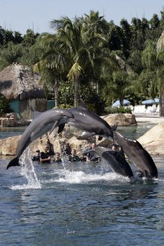 Discovery Cove.... swam with the dolphins :)( been here, done that) <3 Yep I'm ready to go back again!