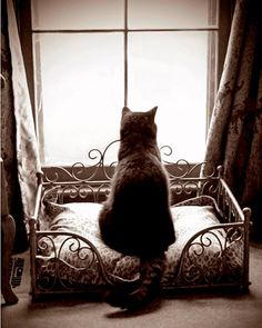 Sepia Tone Kitty Cat Waiting Patiently in the Window by JWPhoto