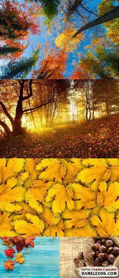 Осень, осенний лес, осенние листья, каштаны - Растровый клипарт   Autumn